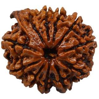 25.63mm 100% Natural (Eleven face Rudraksha) 11 Mukhi Rudraksha  Nepal Bead Lab Certified