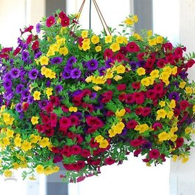 100 Mixed Petunia Seeds Heirloom Hanging Petunia Garden Flowers seeds