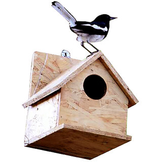 Amijivdaya Robin bird home