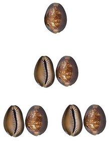 Ever Forever Very Rare Natural Brown Cowrie / Bhuri Kaudi / Koudi / Shells Set of 7 Pcs