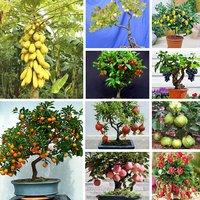 Bonsai Fruit Seeds Mega Combo Papaya Cherry Lemon Grape Apple Guava Orange Pomegranate Strawberry Gooseberry