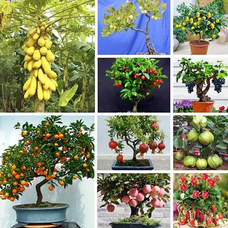 Bonsai Fruit Seeds Mega Combo Papaya Cherry Lemon Grape Apple Guava Orange Pomegranate Strawberry Gooseberry
