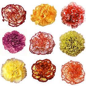 Carnation flower Home made New Design