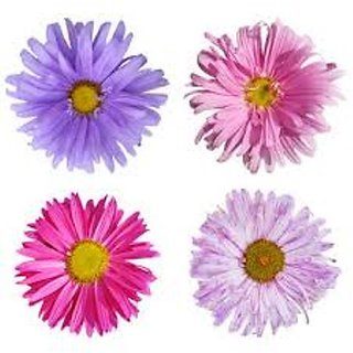 Aster Flower Mixed Colour Seeds