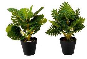 Style Ur Home - Exotic Green Plants with Black Plastic Pot  - 2pcs