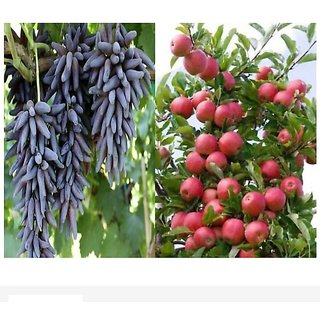 bonsai apple and grapes seeds 10 per packet