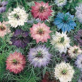 Futaba Clematis Climbing Flower Seeds -Mixed -100 Pcs
