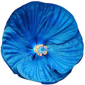 Futaba Giant Hibiscus Flower Seed - Blue - 50 Pcs