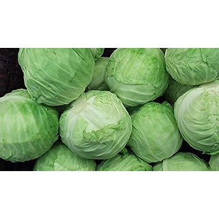 Cabbage Seeds Patta Gobhi Seeds Desi Variety (Pack of 50+ Seeds)