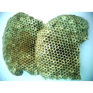 Yellow bee nest ( size 4x5.5 )  Tattaiya ka chatta / Yellow bee hive