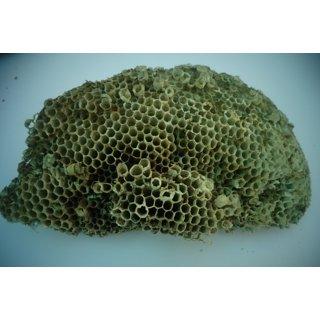Yellow bee nest ( size 5x6.5)  Tattaiya ka chatta / Yellow bee hive