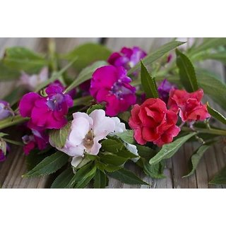 Balsam Mixed Colour Flowers Quality Seeds-Pack of 30 Premium Quality Seeds with Free Growing Soil