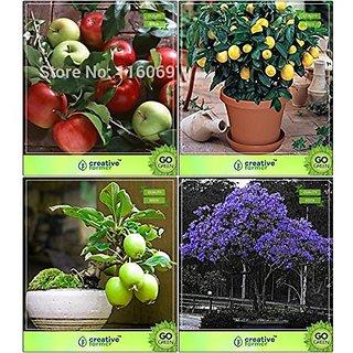 Bonsai Suitable Seeds  Bonsai Suitable Seeds For Garden Combo Apple, Lemon, Guava , Jacaranda Garden Seeds Pack By Creativefarmer