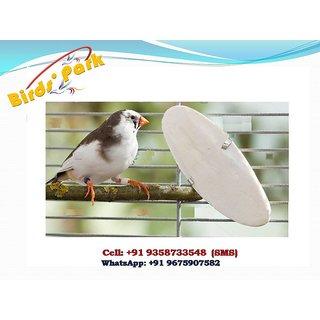 Cuttle Fish Bone Natural-Samundar Jhank(Foam(A good substitute calcium for all seed-eater birds, Reptiles and Tortoises