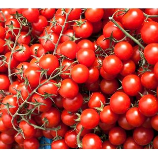 Cherry Tomato Fast Germination Seeds