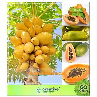 thailand bonsai papaya seeds 10