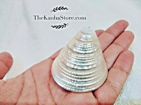 100 Genuine Moti Sankh or Pearl Conch for Mahalakshmi Puja Very Rare Moti Shankh Natural Sea Shell PEARL CONCH MONEY