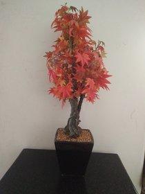 Artifical Silk Maple Tree