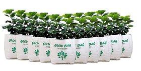 Grow Bag for terrace gardening  Pack of 10 Bags (30 X 16 X 16 cm) Pack of 5 Vegetable Seeds
